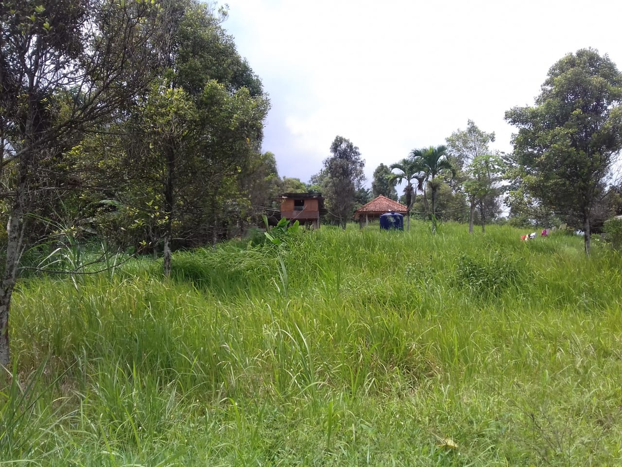 Dilelang 2 (dua) bidang tanah kosong seluas 10.030 m2 di Cianjur